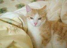 Милая усмешка кота tabby Стоковые Изображения RF