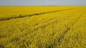 Милая целевая девушка бежать на пути среди желтых полей рапса - виде с воздуха Волосы развевают в ветре акции видеоматериалы
