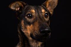 Милая черная красная собака Стоковое Изображение RF
