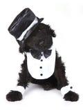 Милая черная русская собака щенка Terrier Стоковые Фото