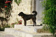 Милая черная собака Стоковые Фотографии RF