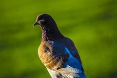 Миллион птиц стоковые изображения