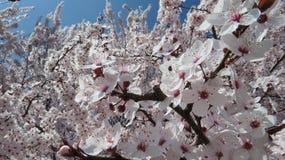 Миллион цветков весной стоковое фото