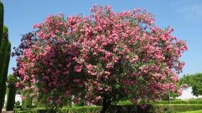 Миллион цветков в дереве стоковые фото