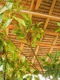 Милое более tarsier усаживание на ветви с зелеными листьями Стоковое фото RF