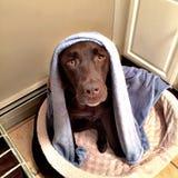Милое время ванны собаки стоковая фотография