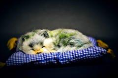 Милое маленькое животное младенца спать обоснованно стоковая фотография rf