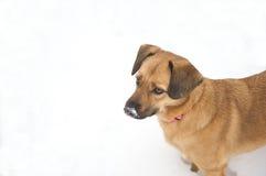 мило выследите ее снежок носа Стоковые Изображения