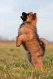 мило немногая делает щенка человека Стоковая Фотография RF
