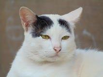Милые белые и черные коты стоковые изображения rf