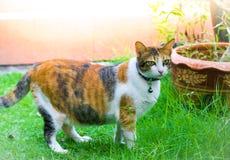Милые коты играют в доме на лужайке используя обои или предпосылку для животного изображения Стоковая Фотография RF