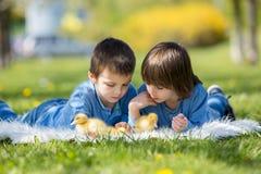 Милые маленькие дети, братья мальчика, играя с sprin утят Стоковые Изображения RF
