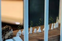 Милые малые заводы в крошечных вазах Стоковая Фотография