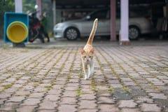 Милые мужские усаживание, положение вниз и идти кота Стоковые Изображения RF