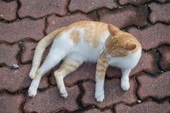 Милые мужские усаживание, положение вниз и идти кота Стоковая Фотография