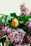 Милые неразлучники попугая сидя на букете сирени стоковые фото