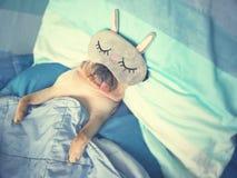 Милые остатки сна собаки мопса с смешной маской в кровати, острословием обруча стоковое изображение