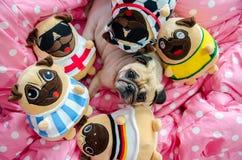 Милые остатки спать собаки мопса на кровати, ослабляют время с сериями  Стоковое Фото