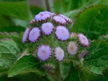 Милые пурпурные цветки стоковые фотографии rf