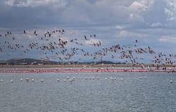 Милые розовые фламинго стоковое изображение