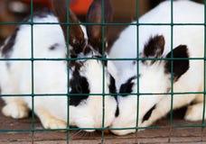 Милые смешные кролики в крупном плане клетки отечественные пушистые любимцы охрана животных стоковые фото