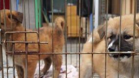 Милые щенята в клетке сток-видео
