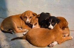 Милые щенята лежат совместно стоковая фотография rf