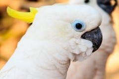 Милый белый какаду на общественном парке Стоковое Фото