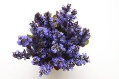 Милый букет цветков весны лета Стоковое фото RF