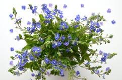 Милый букет цветков весны Стоковые Изображения RF
