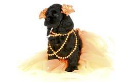 милый женский щенок Стоковые Фотографии RF