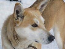 милый животный член/зима стоковая фотография