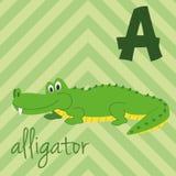 Милый зоопарк шаржа проиллюстрировал алфавит с смешными животными: A для аллигатора Стоковое Фото