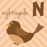 Милый зоопарк шаржа проиллюстрировал алфавит с смешными животными: N для соловья Стоковое Изображение RF