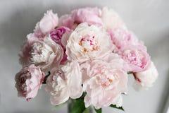 Милый и симпатичный пион Много наслоенных лепестков Предпосылка пука бледная - розовые пионы цветут светлая - серая обои Стоковое Изображение RF