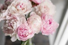 Милый и симпатичный пион Много наслоенных лепестков Предпосылка пука бледная - розовые пионы цветут светлая - серая Обои, вертика Стоковая Фотография
