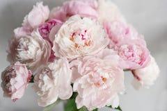 Милый и симпатичный пион Много наслоенных лепестков Предпосылка пука бледная - розовые пионы цветут светлая - серая Обои, вертика Стоковое Изображение