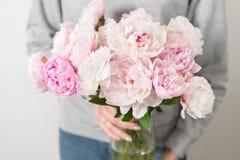 Милый и симпатичный пион цветет в руках ` s женщин Много наслоенных лепестков Серый цвет пука бледный - розовые пионы цветут свет Стоковые Фото