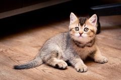 Милый коричневый котенок сидя на поле стоковое изображение
