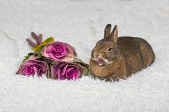 Милый коричневый кролик с цветками Стоковое фото RF