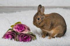 Милый коричневый кролик с цветками Стоковое Изображение RF