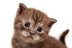 Милый коричневый смешной крупный план котенка стороны стоковое изображение rf