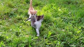 Милый котенок играя в саде видеоматериал