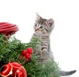 Милый котенок и украшения рождества стоковые изображения rf