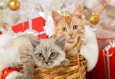 Милый котенок 2 лежа в корзине стоковые изображения