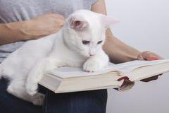 Милый котенок лежа на старой книге изолированной на белой предпосылке стоковые изображения rf
