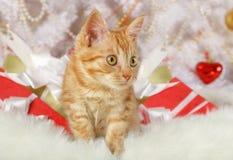 Милый котенок лежа под рождественской елкой стоковая фотография rf