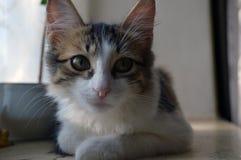 Милый котенок лежит окном стоковые изображения rf