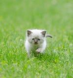 Милый котенок младенца в траве Стоковые Изображения RF