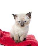Милый котенок младенца на красном одеяле Стоковое Изображение RF